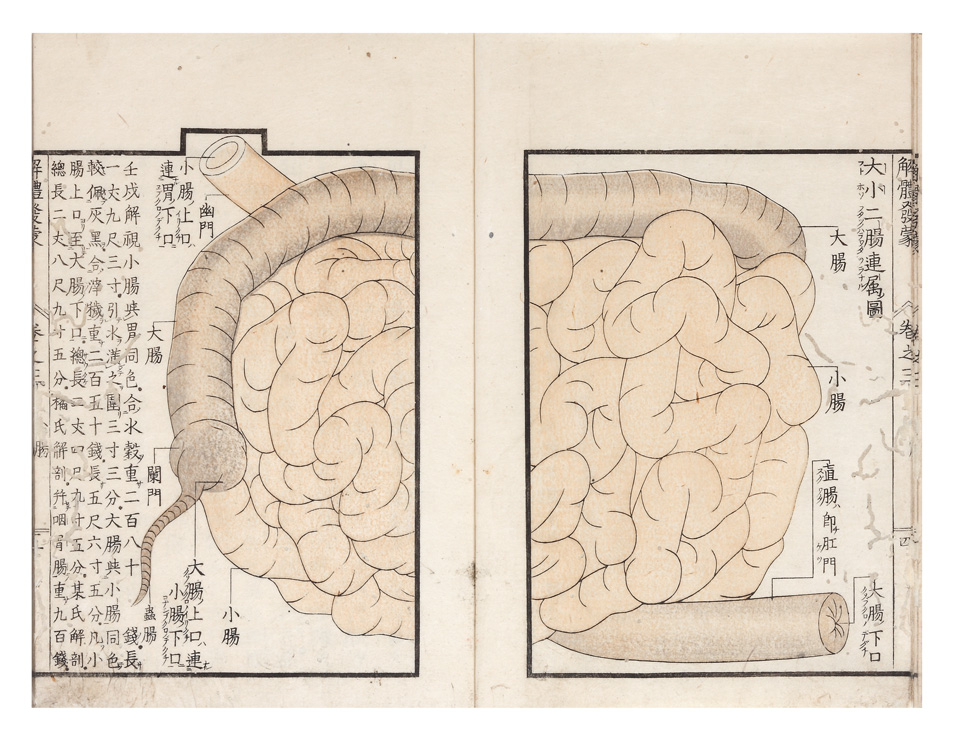 Kaitai Hatsumo Trans Explanation Of Human Anatomy Soshu Mitani