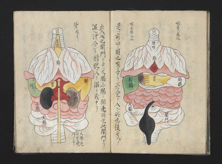 "Manuscript in Japanese characters on paper with nine full-page richly colored anatomical drawings. 20 folding leaves (two of which are blank). 8vo (241 x 173 mm.), orig. wrappers (wrappers somewhat wormed), manuscript label on upper cover ""Zofu zusetsu"" [""Explanation of Intestinal Organs""]. Seizen KAJIWARA."