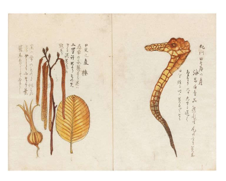 "Manuscript on paper entitled on first leaf ""Kaito shosan bussanshi"" [trans.: ""Local natural history specimens from all over Japan carefully described""]. NATURAL HISTORY ALBUM."