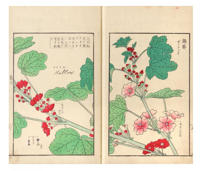 Somoku kajitsu shashin zufu [trans.: A Collection of Plants, Trees, Flowers, & Fruits, faithfully...