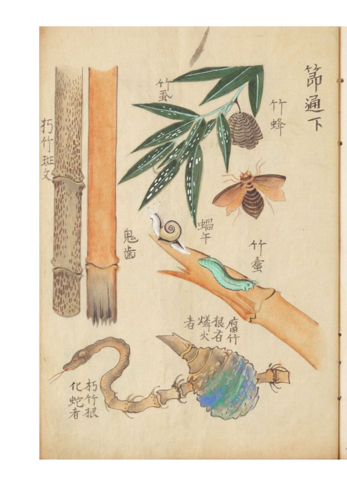 A fine and beautiful album concerned with various genera of bamboo, how to draw them...