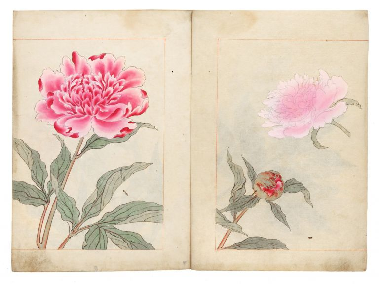 Illustrated botanical manuscript album on paper, the finely accomplished botanical drawings for an, as yet, unidentified publication. EARLY SUMMER FLOWERS.