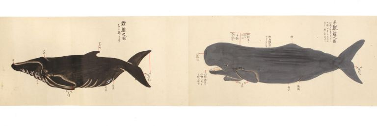 "Manuscript scroll on paper entitled ""Kujirakata shosha zue"" [""Genuine copied illustrations of the whaling techniques of Taiji revealed from the source""]. Wakayama Prefecture WHALING SCROLL, Taiji."