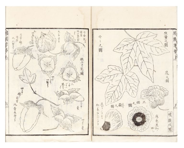 Menpo yomu [The Essentials of Cotton Cultivation]. Nagatsune OKURA