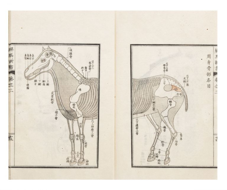 Kaiba shinsho [New Book on the Anatomy of the Horse]. Tosui KIKUCHI.
