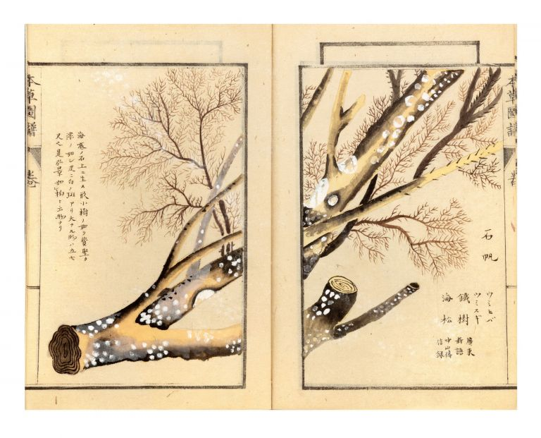 """Two manuscript volumes of the Honzo zufu [Illustrated Herbal]: Part 5 (""""Sanso no rui"""" or """"Species of Mountain Plants"""") & a large section of Part 34 (""""Mizukusa"""" or """"Water Plants""""). Kan'en IWASAKI, or Tsunemasa or Genzo."""