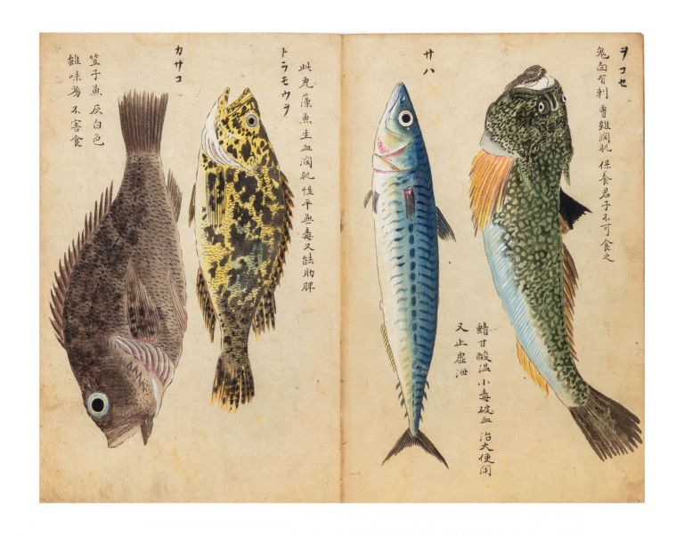 An album with 76 very fine watercolor illustrations of fish, crustaceans, sea cucumbers, & one sea mammal (a seal), mostly edible specimens but a few poisonous. FRUITS OF THE SEA.