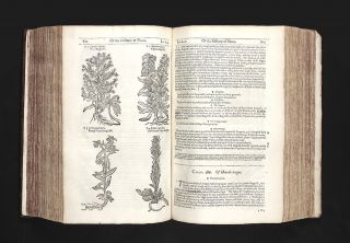 The Herball or Generall Historie of Plantes…Very much Enlarged and Amended by Thomas Johnson.