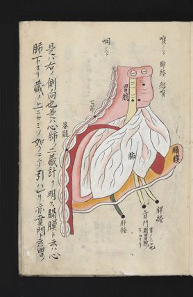 "Manuscript in Japanese characters on paper with nine full-page richly colored anatomical drawings. 20 folding leaves (two of which are blank). 8vo (241 x 173 mm.), orig. wrappers (wrappers somewhat wormed), manuscript label on upper cover ""Zofu zusetsu"" [""Explanation of Intestinal Organs""]."