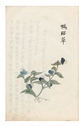 "Manuscript on paper entitled on label of upper cover ""Honzo gazu"" [trans.: ""Illustrated Medicinal Plants""]."