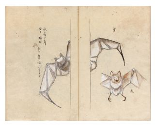 """Manuscript on paper entitled on first leaf """"Kaito shosan bussanshi"""" [trans.: """"Local natural history specimens from all over Japan carefully described""""]."""