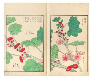 Somoku kajitsu shashin zufu [trans.: A Collection of Plants, Trees, Flowers, & Fruits,...