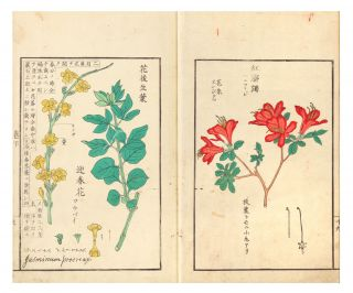 Somoku kajitsu shashin zufu [trans.: A Collection of Plants, Trees, Flowers, & Fruits, faithfully rendered].