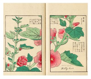 Somoku kajitsu shashin zufu [A Collection of Plants, Trees, Flowers, & Fruits, faithfully rendered].