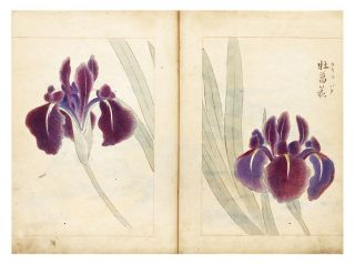 Illustrated botanical manuscript album on paper, the finely accomplished botanical drawings for an, as yet, unidentified publication.