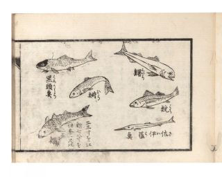 Kaisen shogyo shochushikan [Comprehensive Guide to Ocean & River Fish].