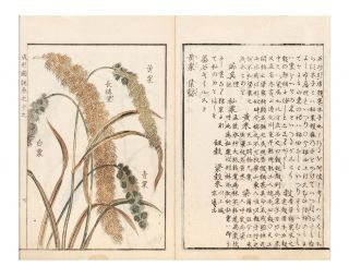 Seikei zusetsu [An Illustrated Book of Agricultural Things].