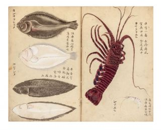An album with 76 very fine watercolor illustrations of fish, crustaceans, sea cucumbers, & one sea mammal (a seal), mostly edible specimens but a few poisonous.