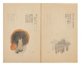 """Illustrated manuscript on fine mica-dusted paper, entitled """"Shinyo kinpu"""" [""""Mycology Explained & Illustrated in Color""""]."""